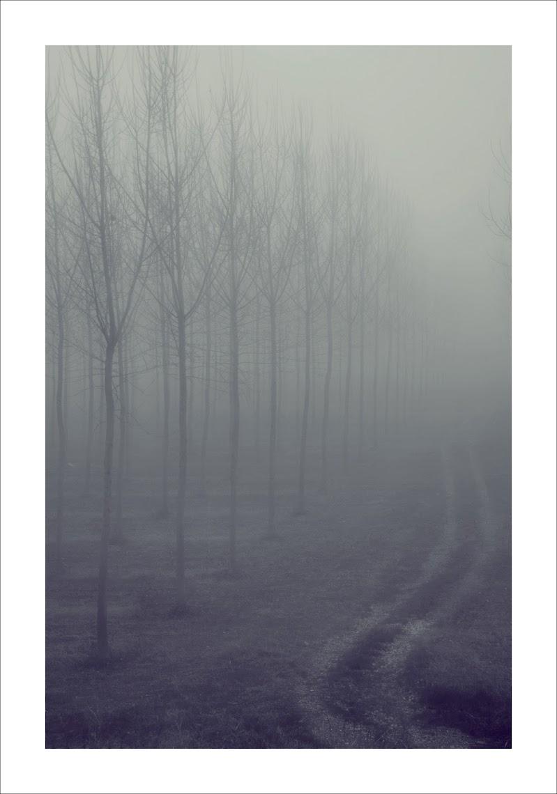la strada che non.... di cristinababuder