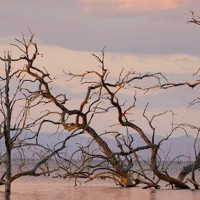 by Fanie Weldhagen - Landscapes Waterscapes