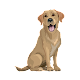 Brave Puppy : Dog Training Tool for PC-Windows 7,8,10 and Mac