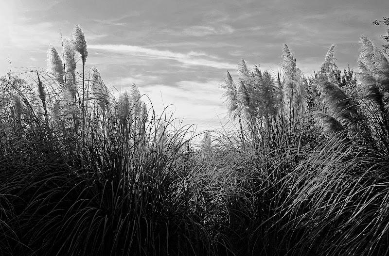Il vento in una foto di StefanoRegi