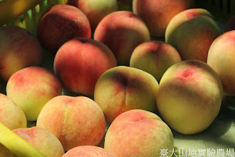 Photo: 拍攝地點: 梅峰-桃花廊 拍攝植物: 水蜜桃 拍攝日期: 2014_07_27_FY