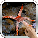 Sea Star HD Wallpaper icon