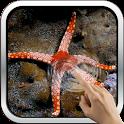 Sea Star HD Wallpaper icon