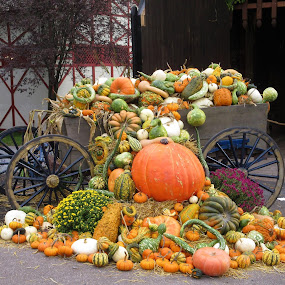 Fall bounty  by Dawn Kiscadden - Nature Up Close Gardens & Produce