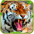 Furious Tiger Simulator ♛ apk