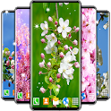 Cherry Blossom 3D Wallpaper 🌸 Spring Wallpaper icon