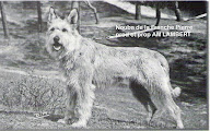 Photo: 1967: Nouba de la Franche Pierre Prod et Prop: Mme Lampert (Mistral de la Franche Pierre x Musette du Grand Tarsac) Pedigree: http://www.pawpeds.com/db/?p=bpi&a=p&id=413589&g=4