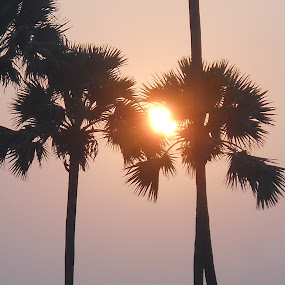 Sun peeps through the trees.. by Sandeep Suman - Nature Up Close Trees & Bushes ( tree, scene, sun )