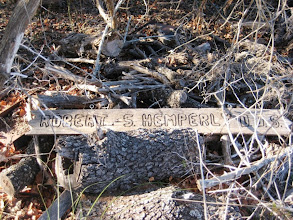 Photo: In Kerr County, we searched for an hour for a state co-champ Escarpment Black Cherry (Prunus serotina var. eximia) and only located it after finding the owner's sign.
