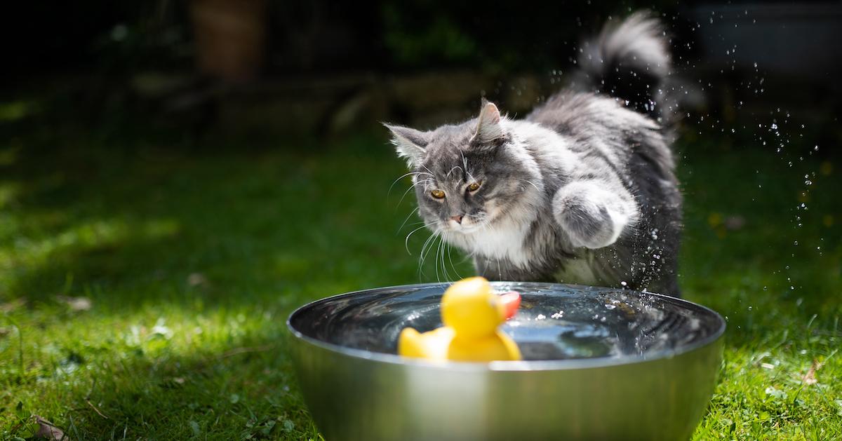 La plupart des chats n'apprécieront pas prendre le bain