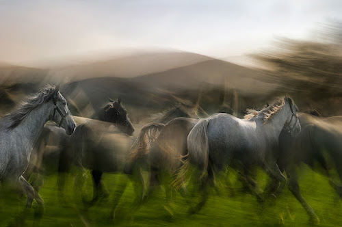 Herds by Milan Malovrh - Animals Horses