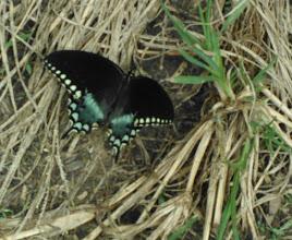 Photo: blue butterfly in garden