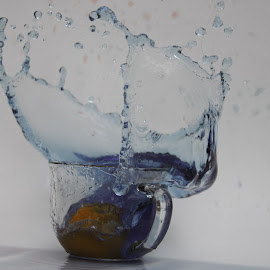 orange in blue water by Logan Williams - Abstract Water Drops & Splashes ( orange, blue water, splash, water, cup )