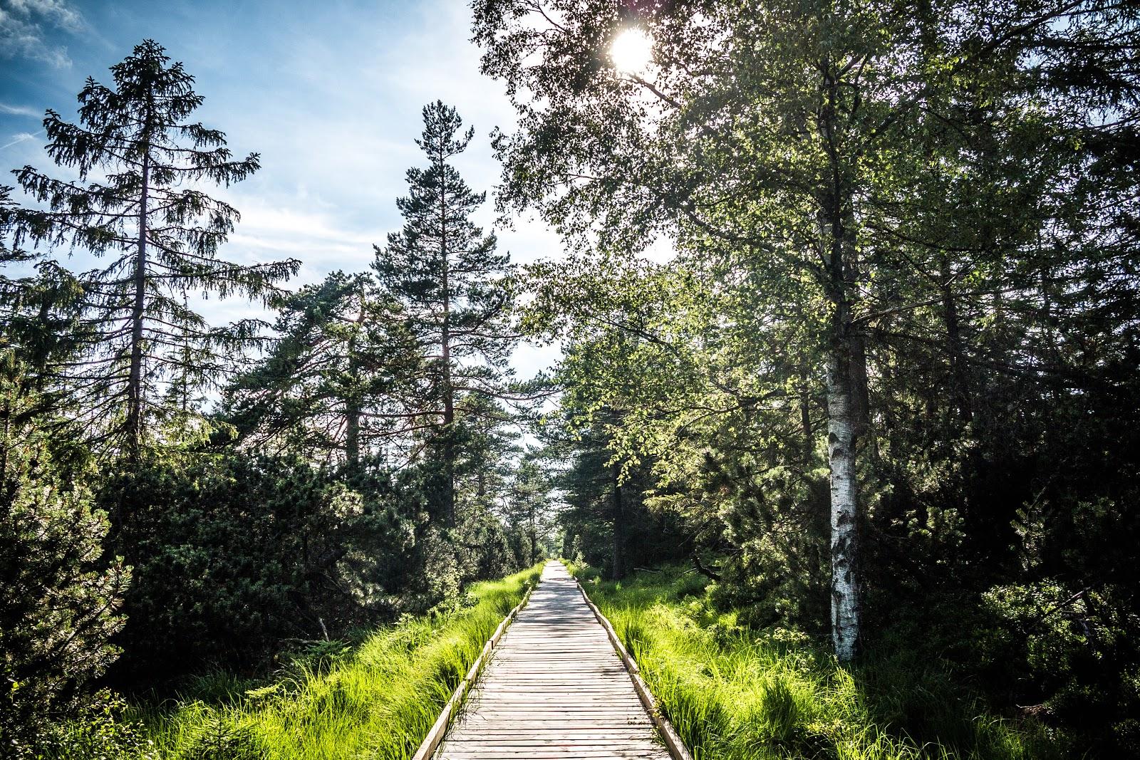 De highlights  im Schwarzwald
