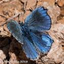 Turquoise Blue?