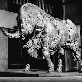 Bull beast by Jernej Lah - Black & White Objects & Still Life ( beast, ljubljana, bull )