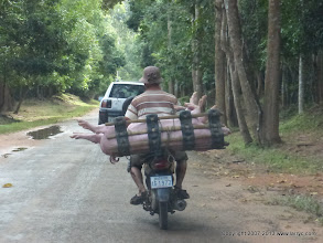 Photo: Livestock transportation in Cambodia.