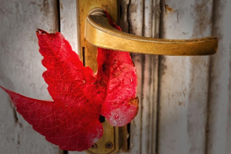 L'autunno non bussa...entra di Concetta Caracciolo