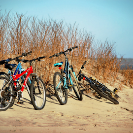Bikes On The Beach Dunes by Robin Amaral - Sports & Fitness Cycling ( sand dunes, bikes, healthy, beach, outdoor photography, martha's vineyard, bicycles )