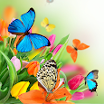 Butterfly Live Wallpaper apk