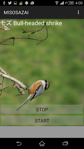 鳥鳴き声モズ