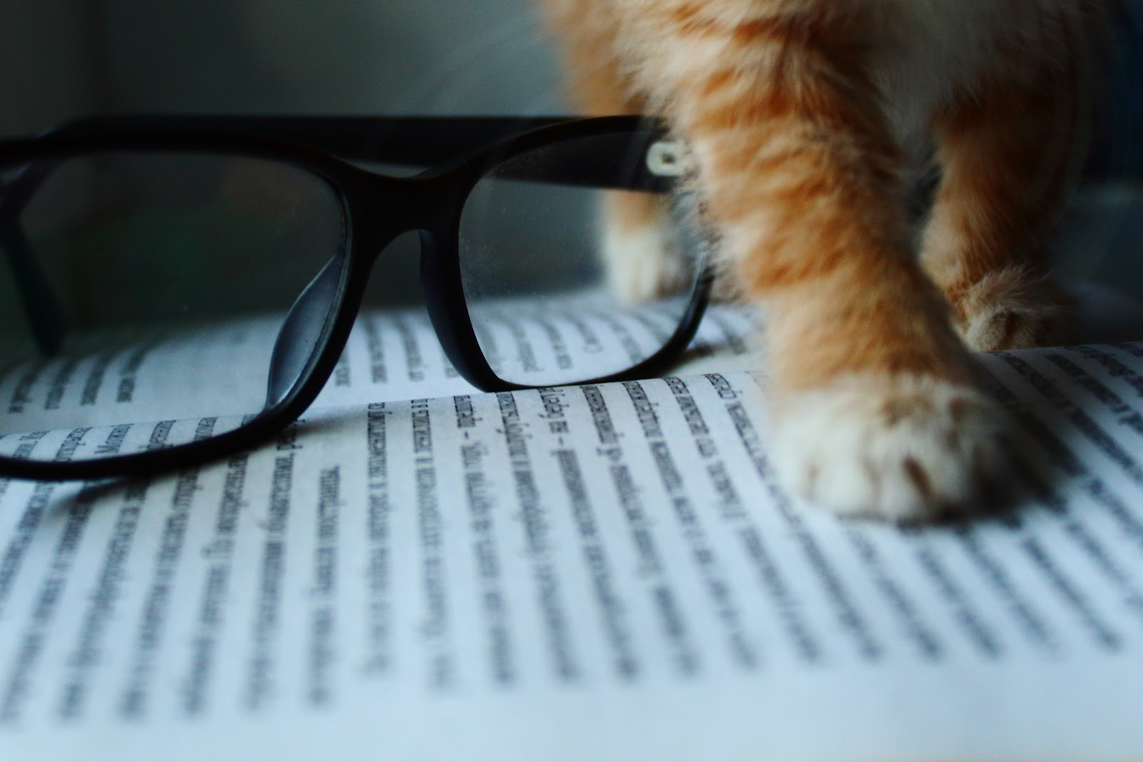 cat paw on book with specs