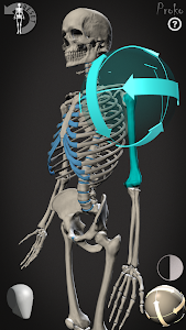 Skelly: Poseable Anatomy Model v1.01