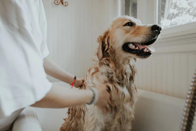 Dog getting bath at home