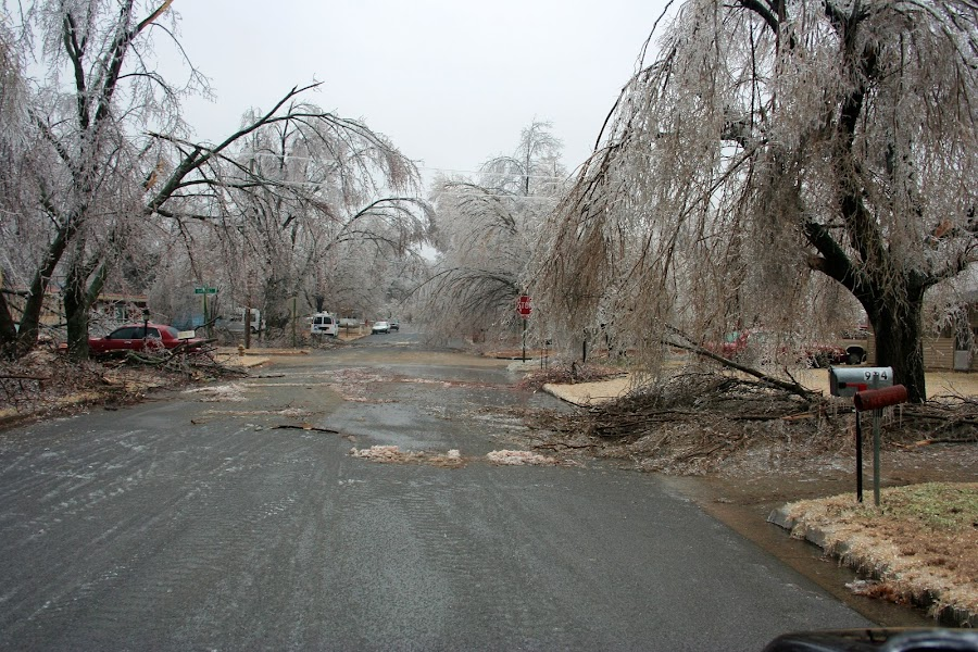 Ice Storm 2009 by Becky Patlan-Garcia - News & Events Weather & Storms ( pwcstorms, 2009, ice storm, damage, arkansas )