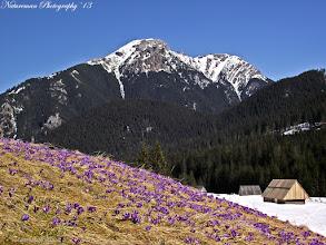 Photo: Az Iván-hágóból egykor a kék jelzésű turistaút vezetett a Kéményes-hegyre. Fotó: Natureman Photography
