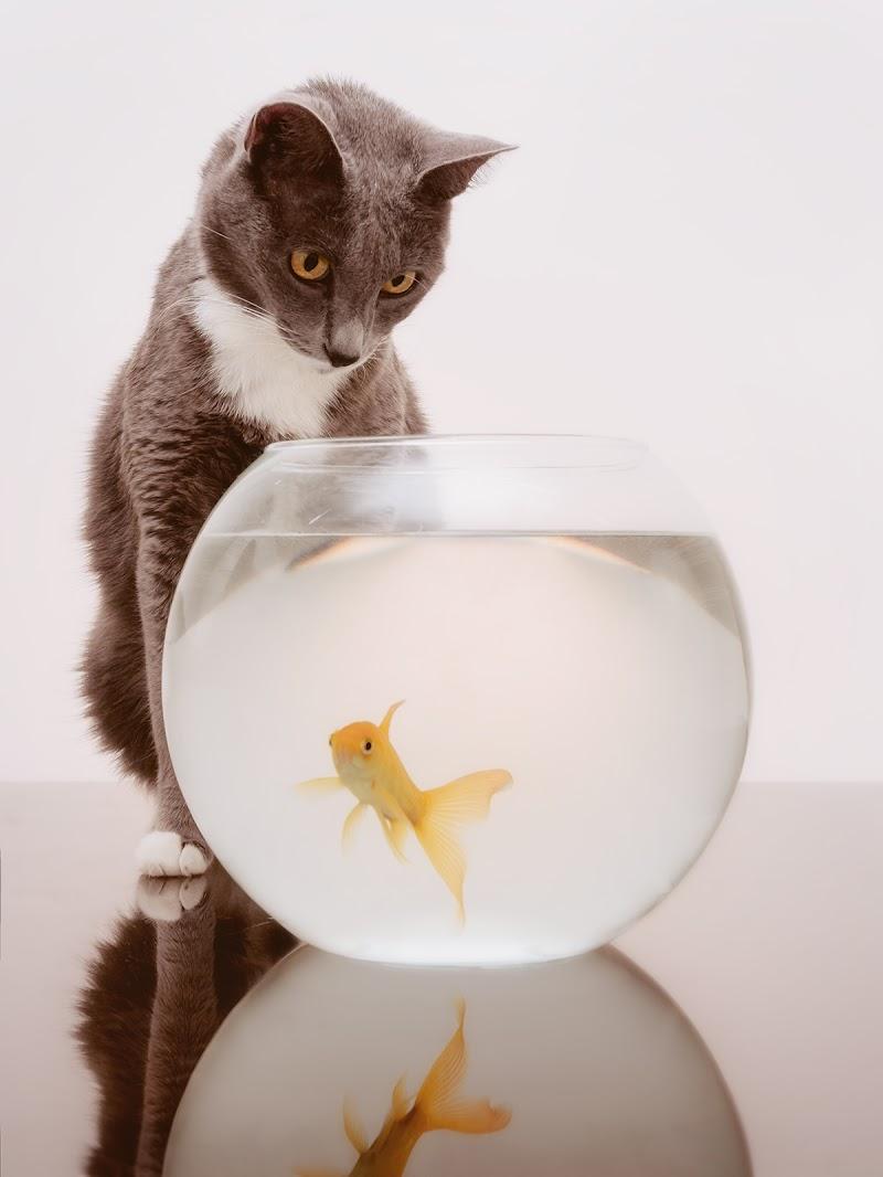 Oh oh...mi è semblato di vedele un gatto... di Sergio Rapagnà