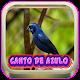 Canto De Azulao Palco Mp3 para PC Windows