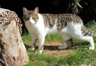 Photo: Кот с острова Рейнеке