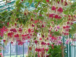 Photo: Cascata di fiori