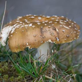 by Ciupe Simona - Nature Up Close Mushrooms & Fungi