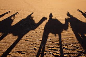 Photo: Camel Shadows