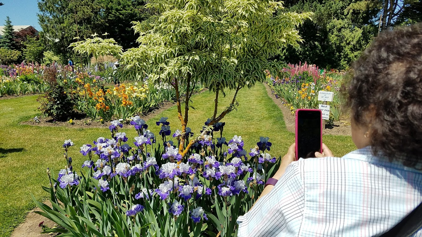 Visiting the Schreiner's Iris Gardens is easy, just an hour south of Portland, and is free - a great option if you are in Portland or Salem during their May bloom season