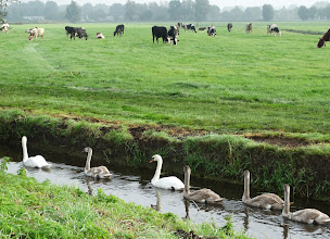 Photo: Puur Natuur in Friesland