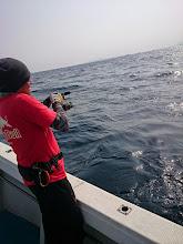 """Photo: 「ぎゃーっ!ガオーッ!」 """"こいとさん""""強烈ヒーット! 海底起伏、荒くないので 慌てず、慎重に!"""