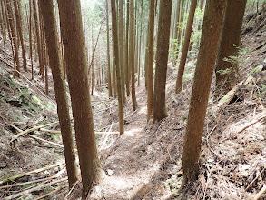 沢には倒木が多い