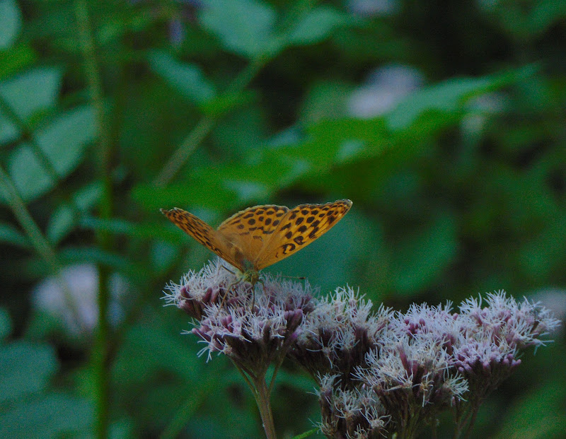 Un mondo di polline e farfalle di giulia_juls