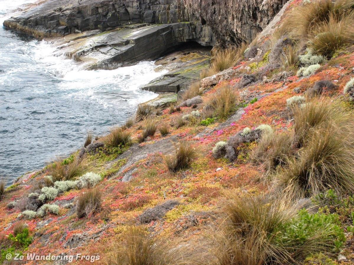 Colorful lichen and moss on Cape Borda cliffs