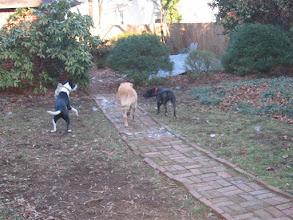 Photo: 3 dog battle