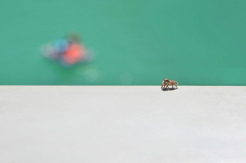 Passeggiata solitaria  di Steo