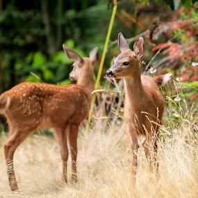 Mirrored Deer by Tara McKenzie - Animals Other Mammals ( #deer, #babyanimals, #cuteanimals, #photography, #canada, #wildlife )