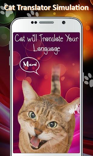 Cat Translator Simulation