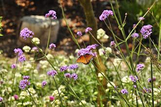 Photo: San Diego Botanical Gardens - Butterfly garden