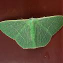 Mango Emerald