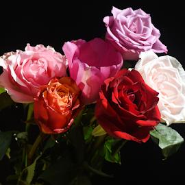 very nice bouquet rose flower by LADOCKi Elvira - Flowers Flower Arangements ( garden nature plants tree blossom floral flower )