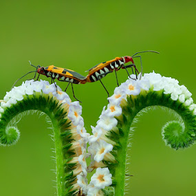 Greenty with you by Faiq Alfaizi - Animals Insects & Spiders
